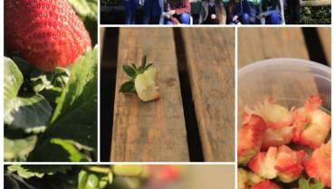 Fotografieklub besoek Redberry Farm in George